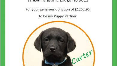 Photo of Wraxall lodge would like to introduce Carter